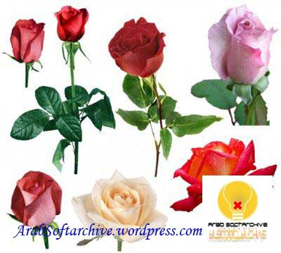 مجموعة مميزة من صور الأزهار والورود المفرغة